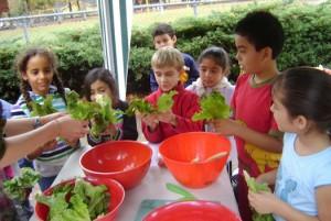 Edible_Schoolyard_Project
