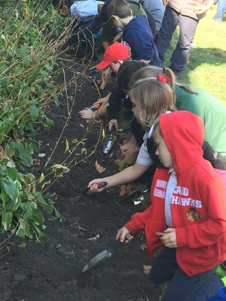 St. Giles Elementary served apples and planted Daffodils in celebration of the 2015 Great Apple Crunch