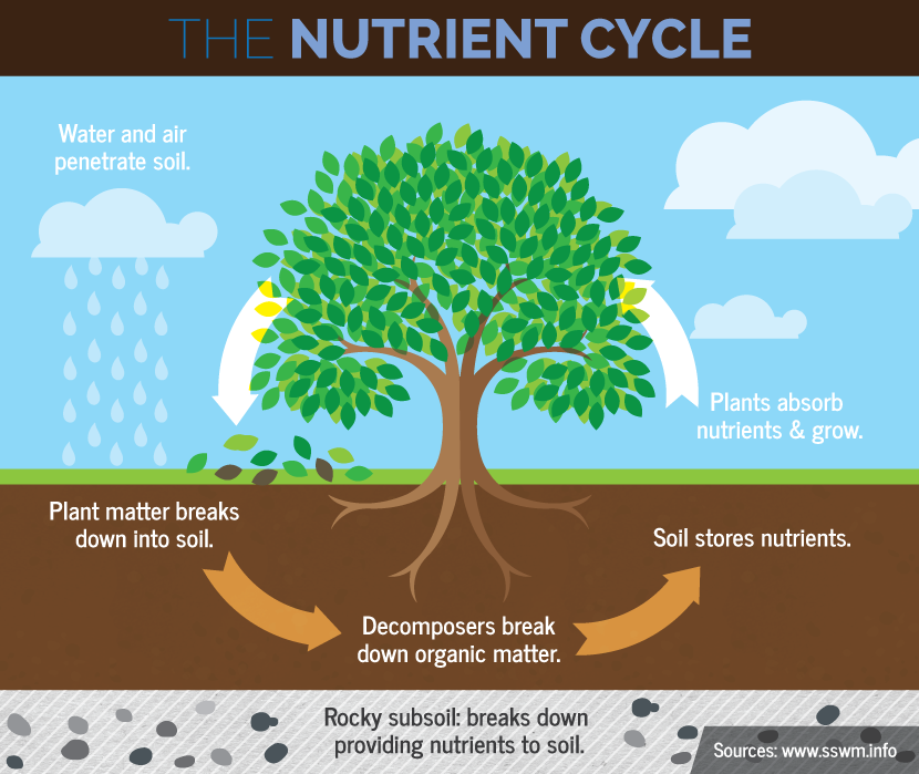 the nutrient cycle and the nitrogen